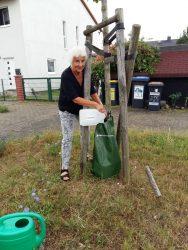 Hilfe für junge Bäume